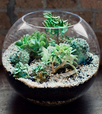Craft on Commons – Terrariums
