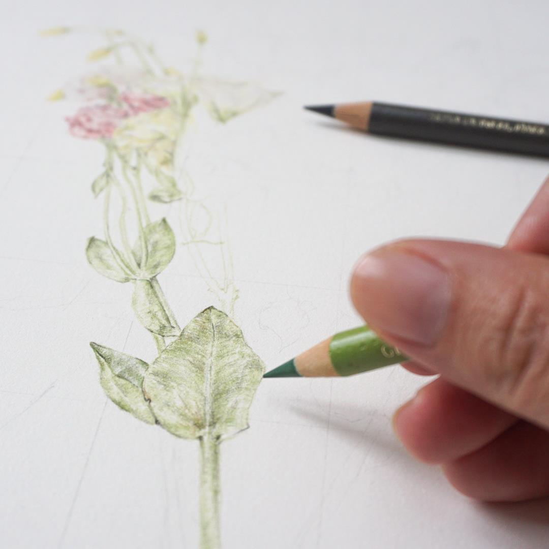 Botanical Pencil Drawing