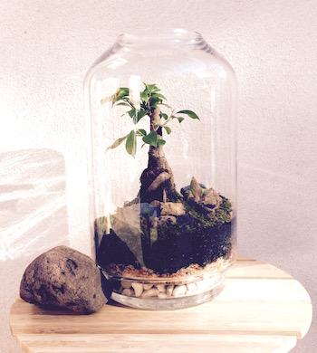 Bonsai Ficus Terrarium Workshop