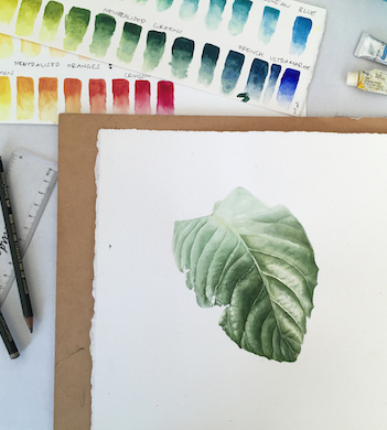 Introduction to Botanical Art