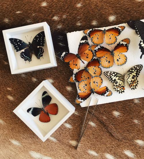 Butterflies & Bubbles
