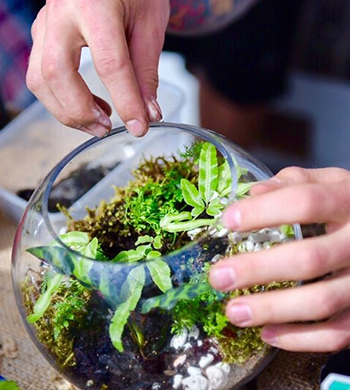 Tropical Terrarium Workshop!