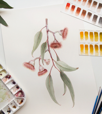 Introduction to Botanical Art – Australian Natives