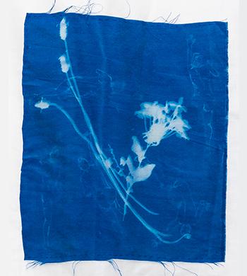 Cyanotype Printmaking