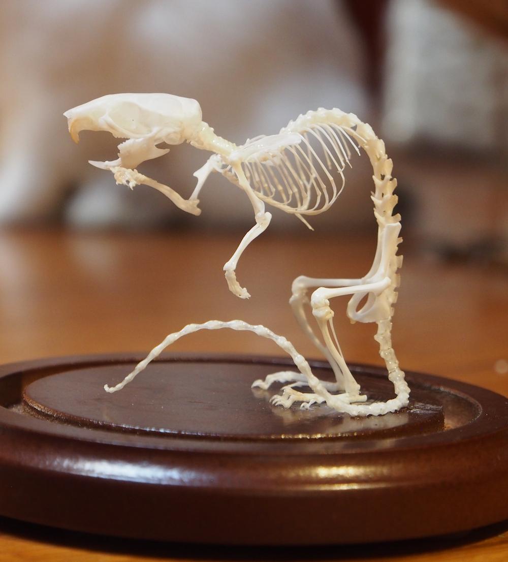 Rest in Pieces – Skeletal Articulation 2-Day Workshop