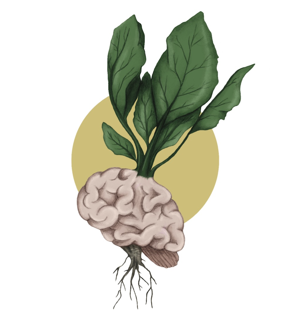 Cooking for Gut & Brain Health