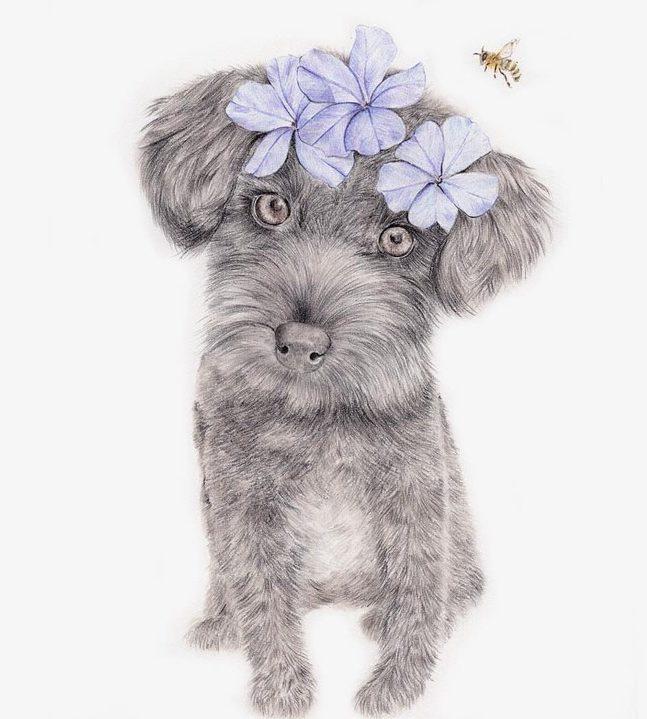 Craft on Commons: Pet Portrait Illustration
