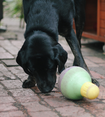 Good Dog Masterclass: Keeping Your Dog Busy When You're Short On Time