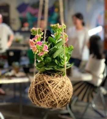 Japanese Kokedamas: Make a hanging string garden!