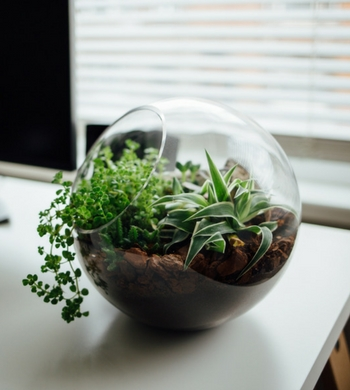 Beginners Terrarium Workshop