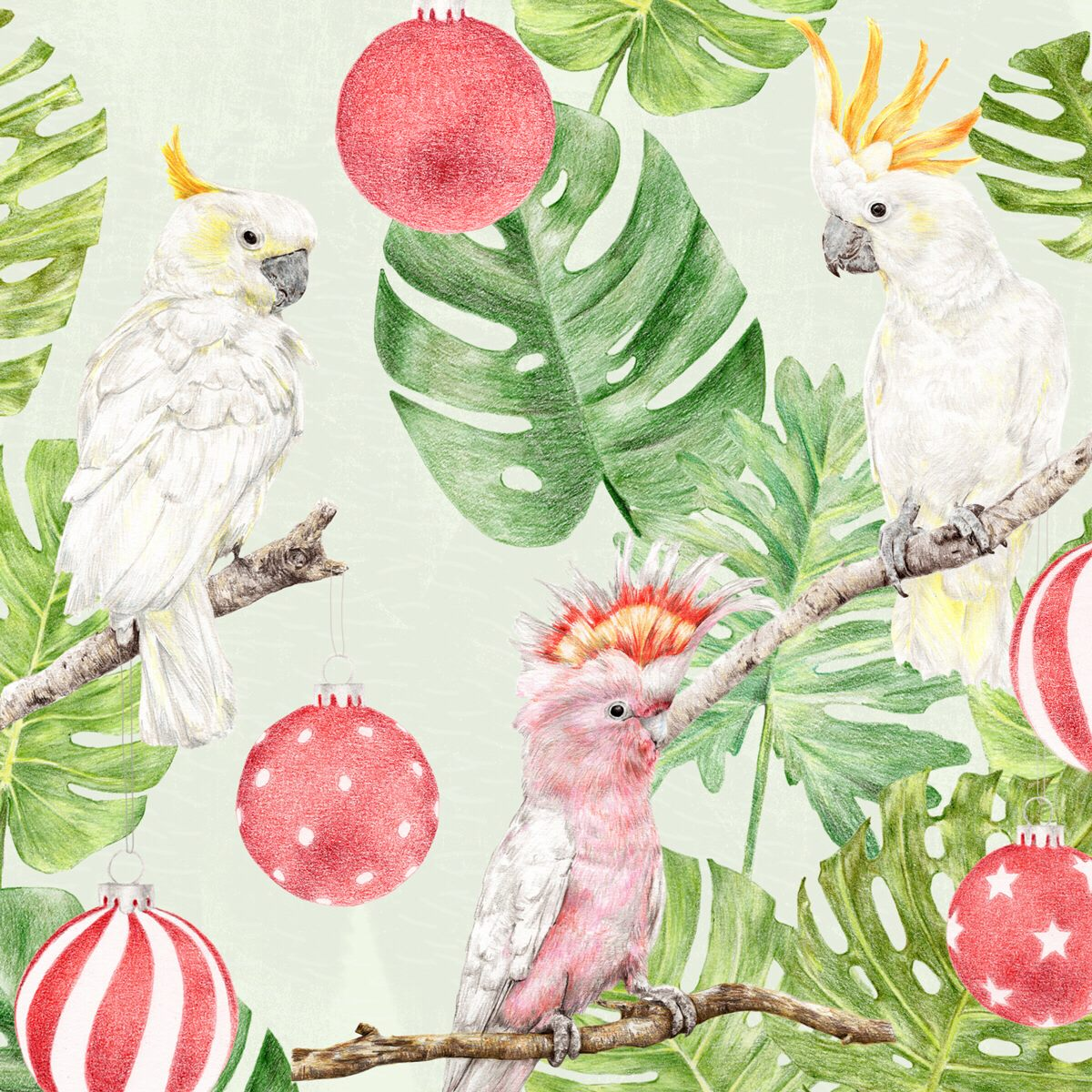 Aussie Animal Illustration