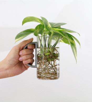 Plant Propagation & Prosecco!