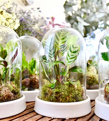 Tropical Dome Terrarium