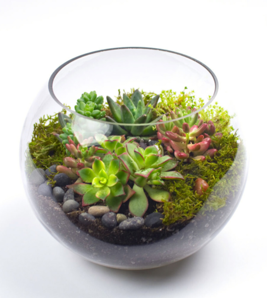 Terrariums and Tequila