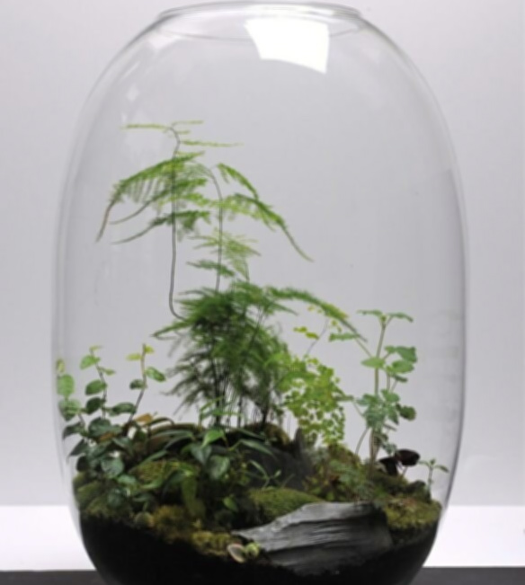 Tropical Terrariums and Tanqueray