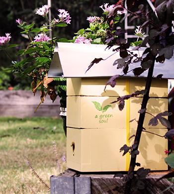 Native Bee Keeping 101