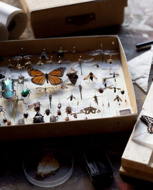 Insect Preservation